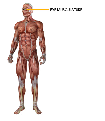 Target Muscles